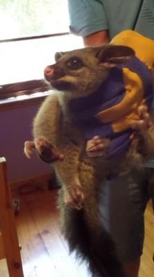 Possum Catcher.