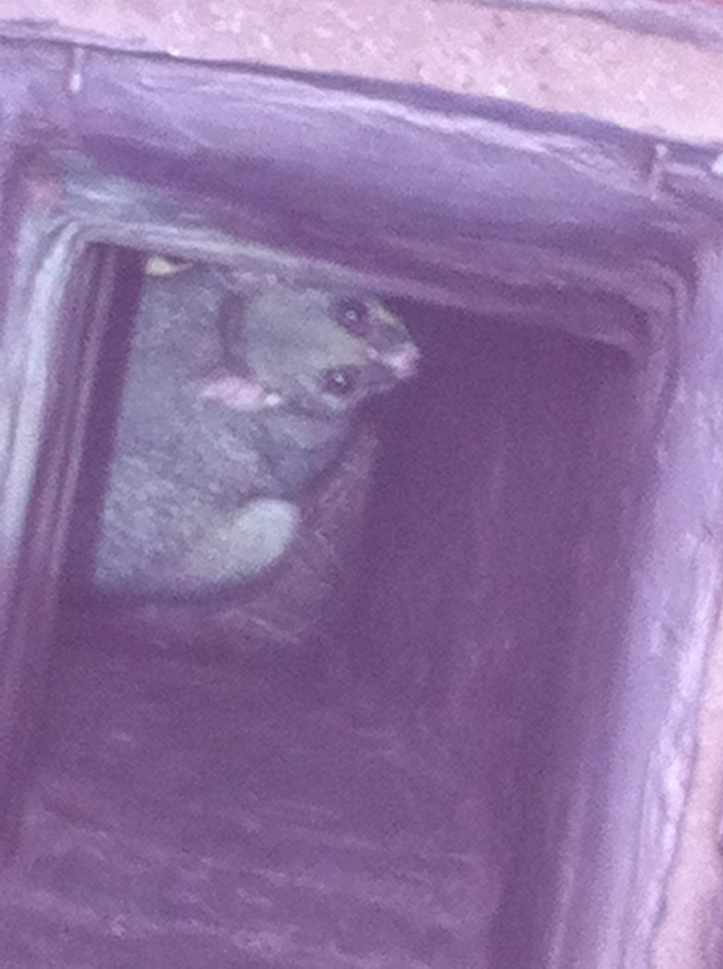 Possum In Chimney.