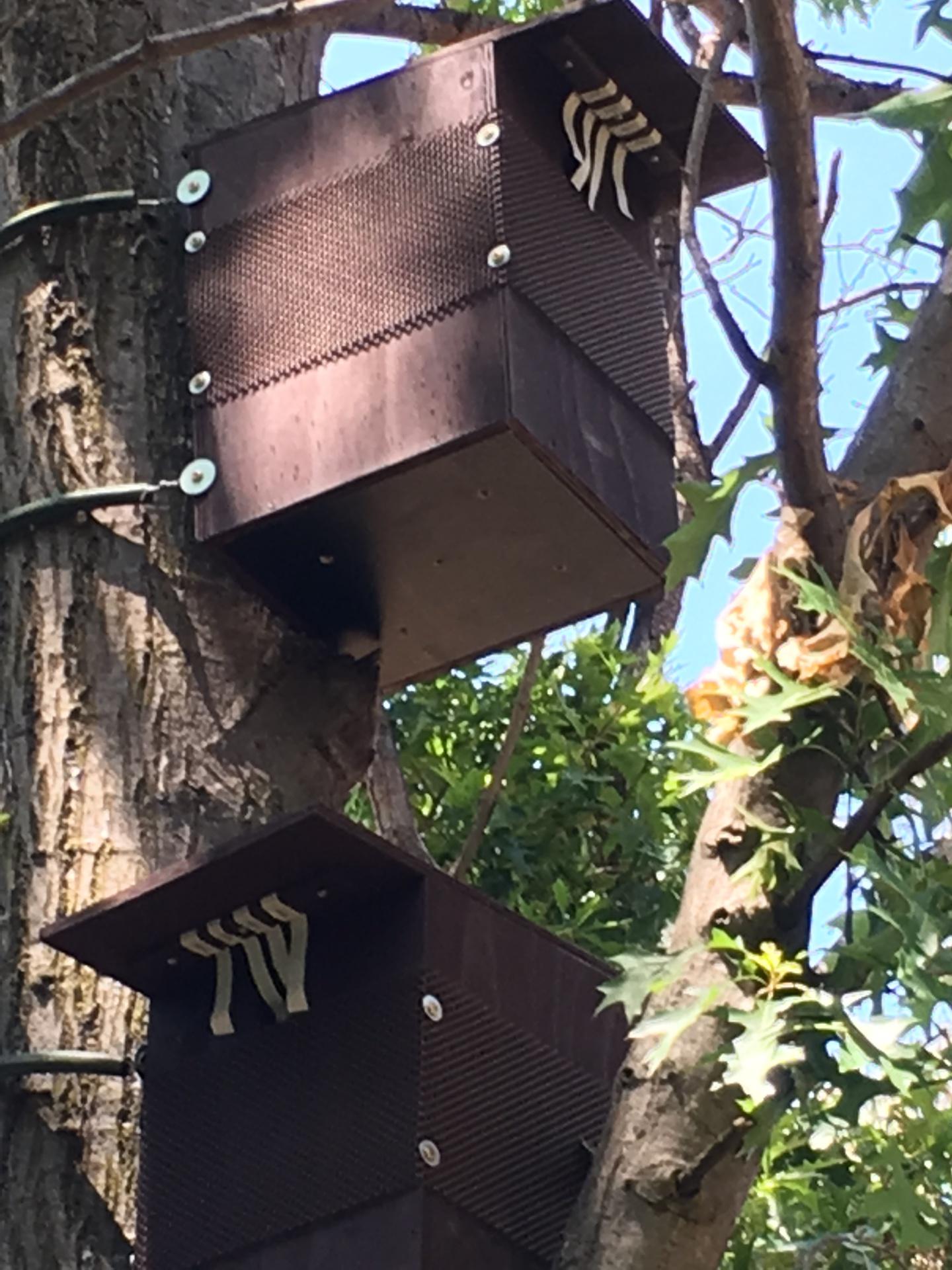 Possum Boxes.