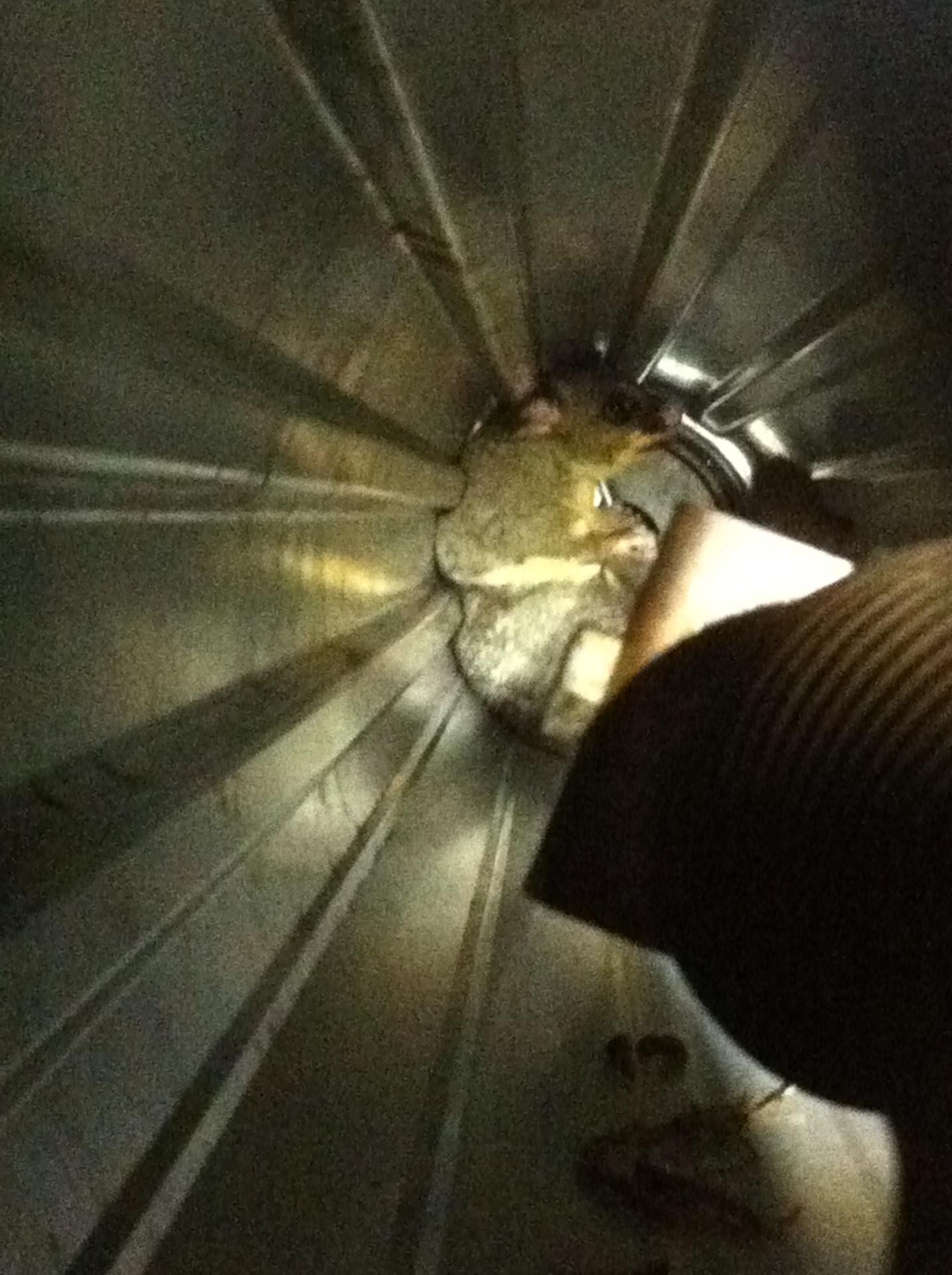 Possum Living In Roller Door.
