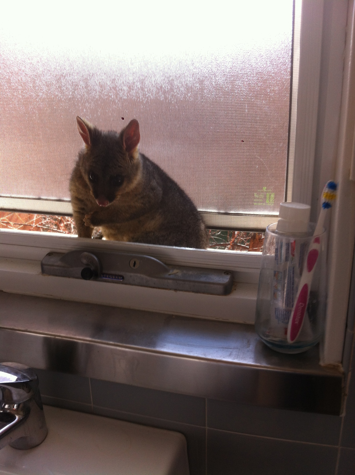 Possum Trying To Get In.