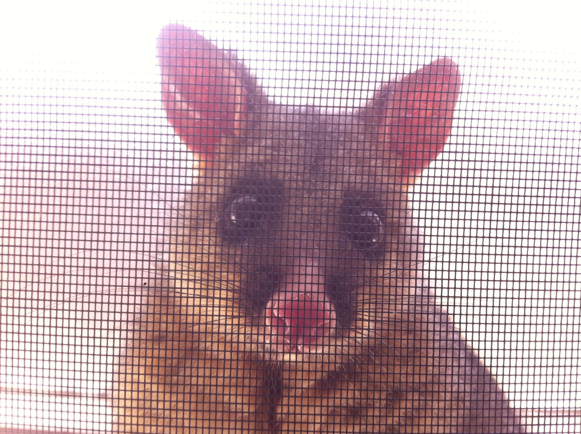 Possum At Window.