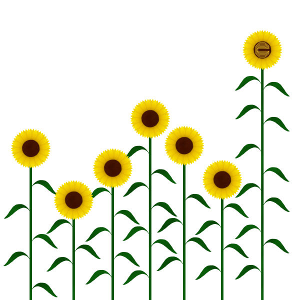 My Common Goods: Sunflowers