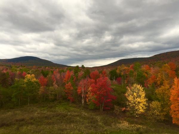 Perfect Fall Foliage