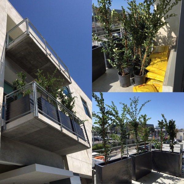 Santa Monica Before & After Patio Design