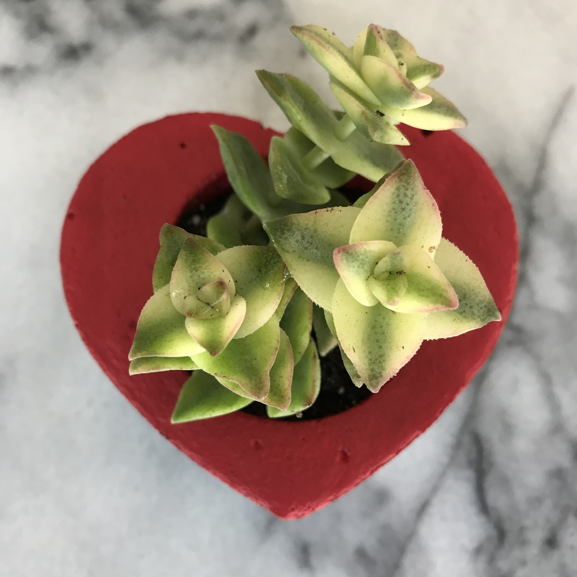 Mini Heart Planter