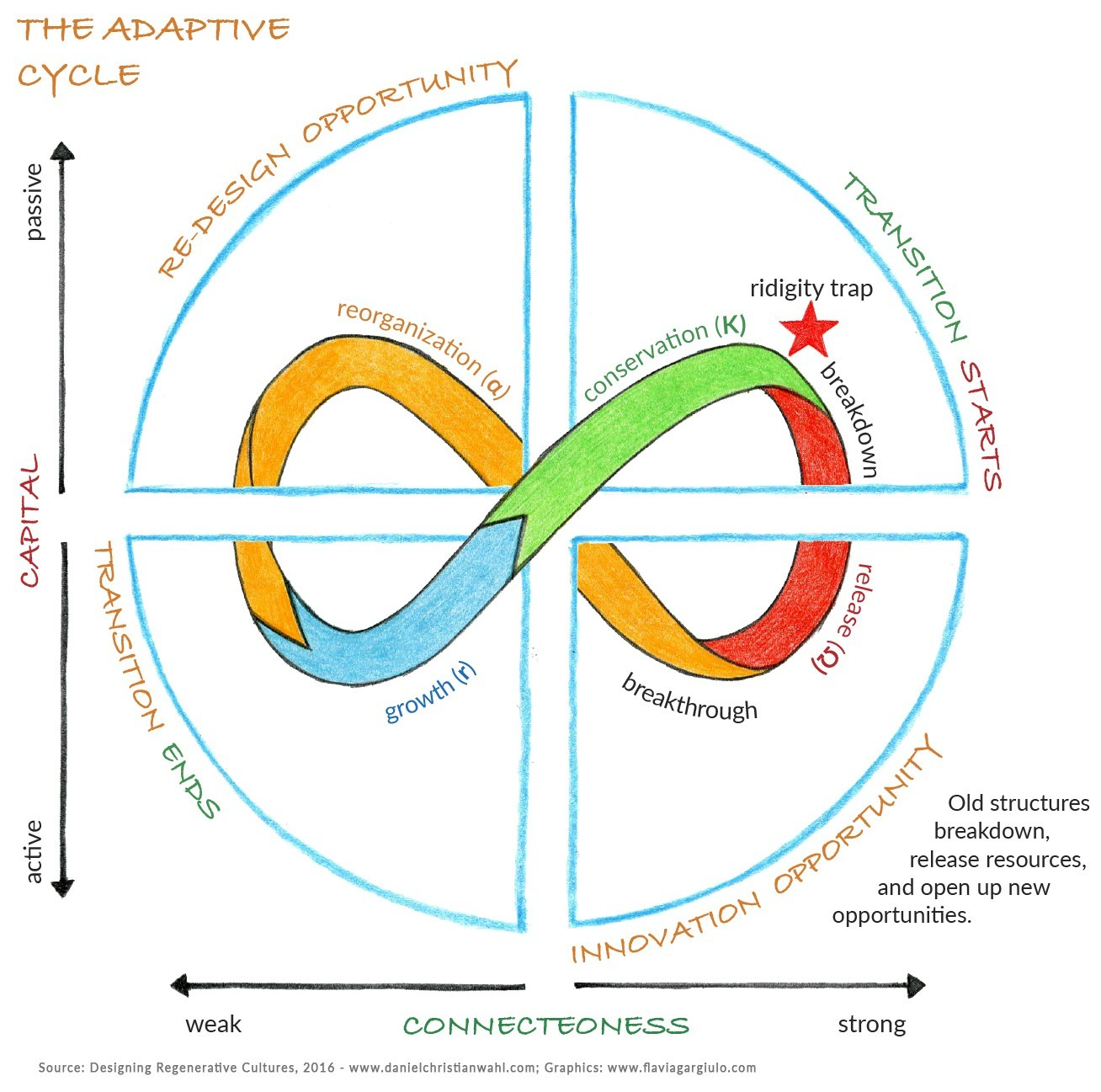 Program Evolution and the Adaptive Cycle