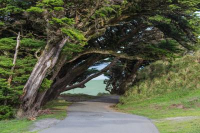 Visit the Beautiful treasure of Marin County!