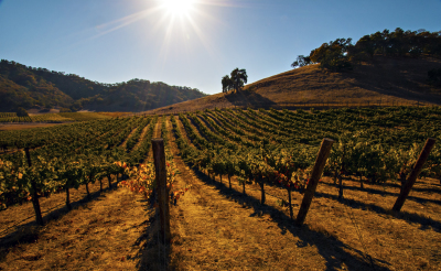 Visit the Legendary Napa Valley!