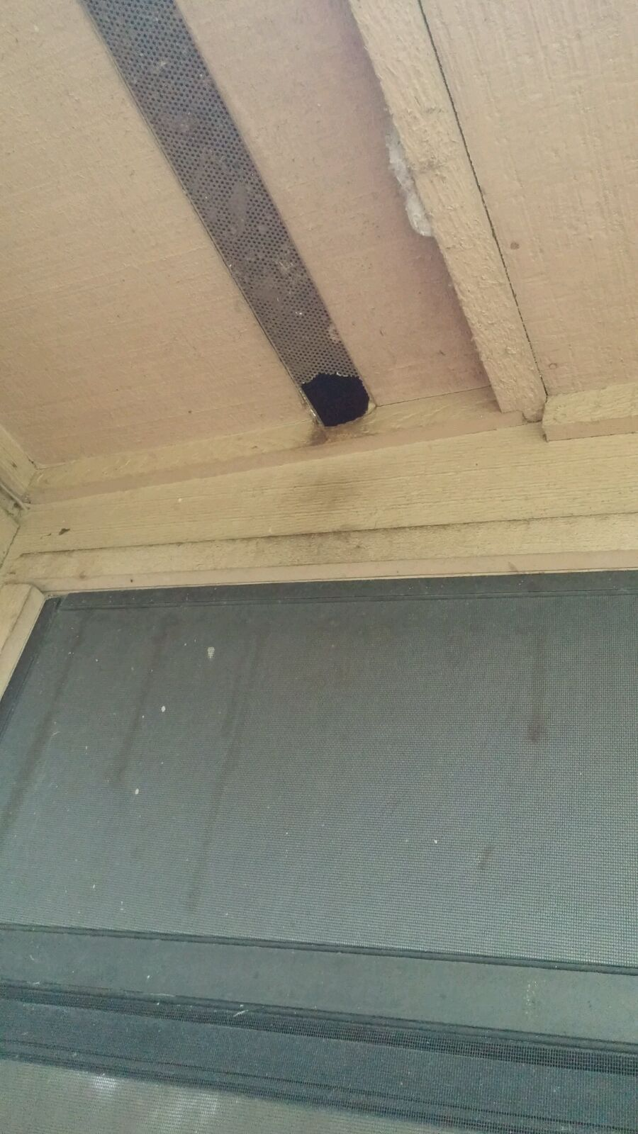 Rat entry at a house in Ocala