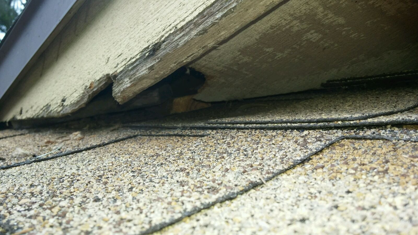 Rat entry point at a house in Gainesville