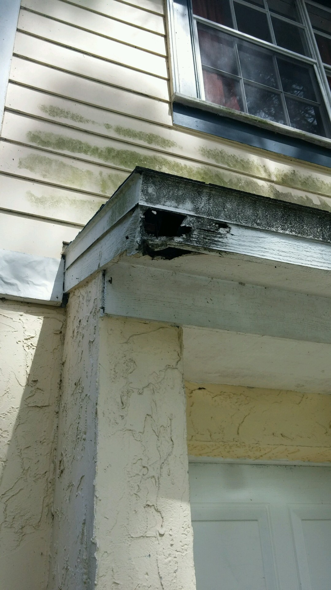 Squirrel damage at a house in Leesburg