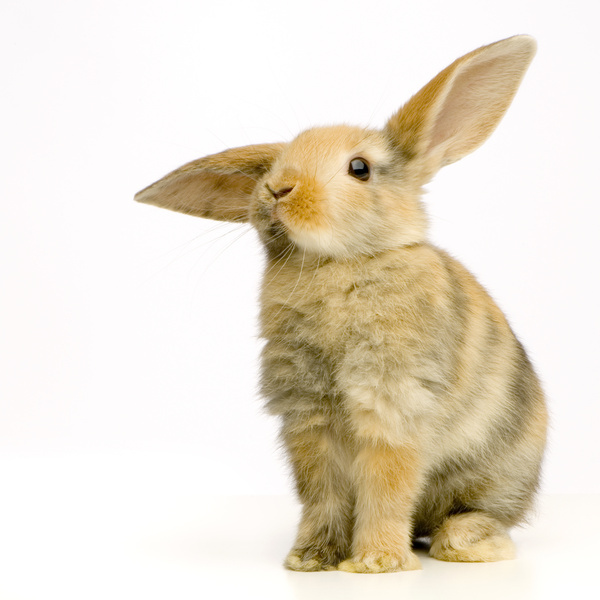 Rabbit Starters