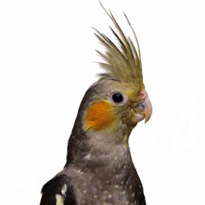 Birdy Bonanza