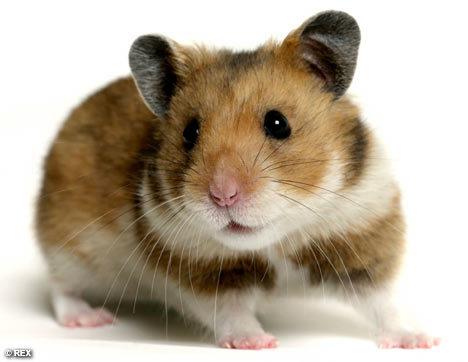 Hamster Starter Sets