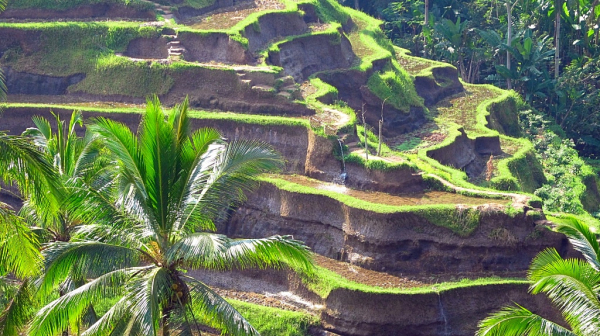 Explore the rice fields!