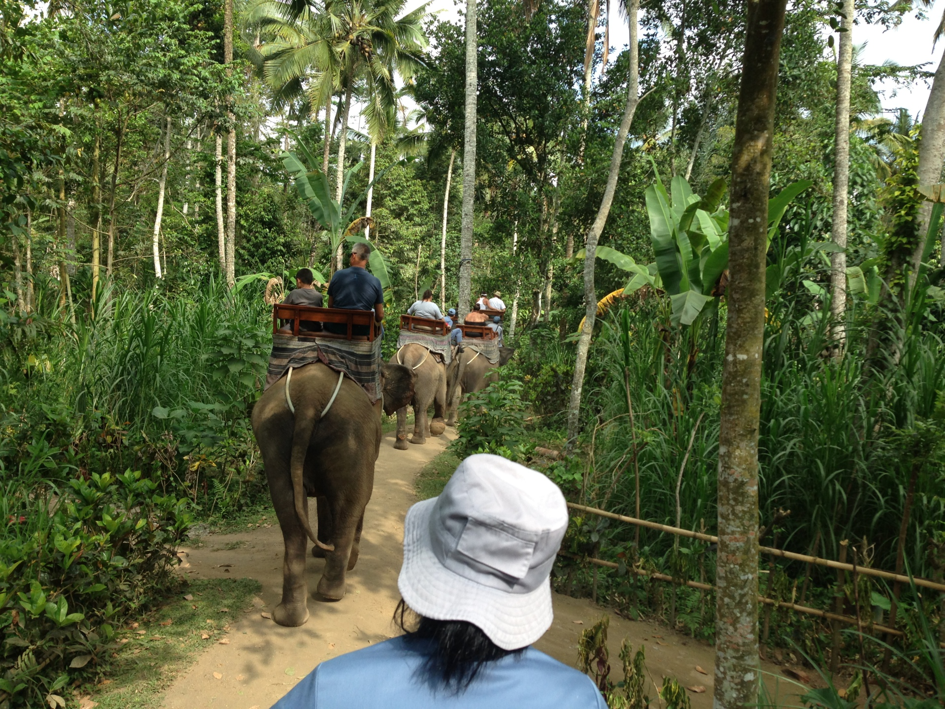 Ride an elephant!
