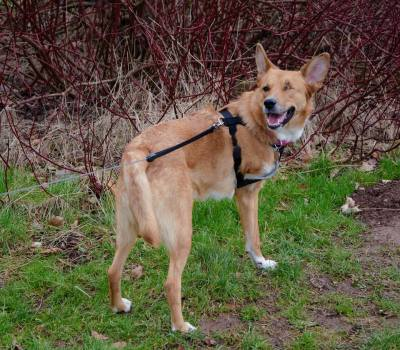 Tripaw Rescue Dog