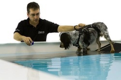 Bluewaters Pet Canine Hydrotherapy