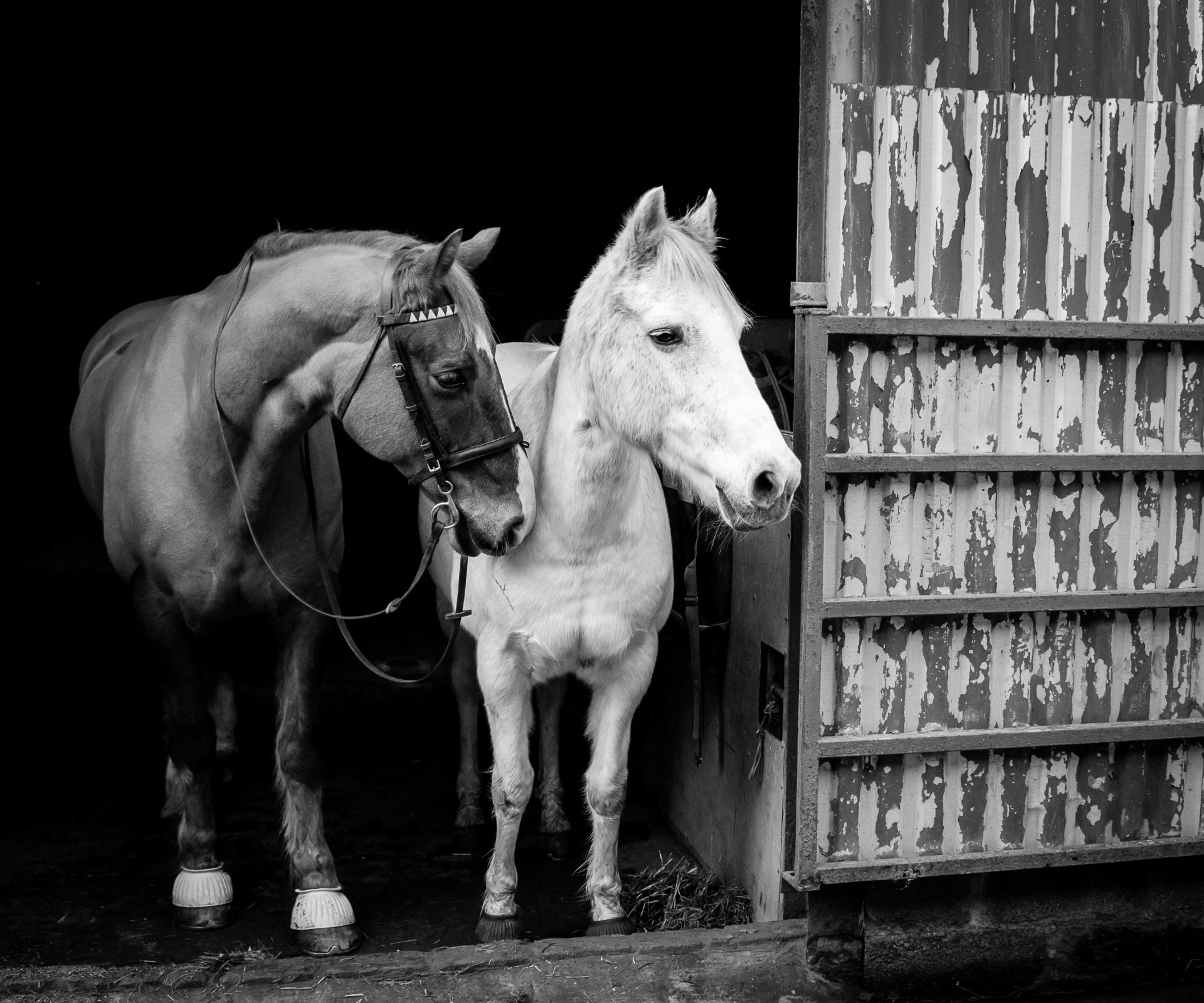 Stable b & w