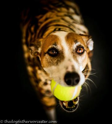 Spanish Rescue Dog