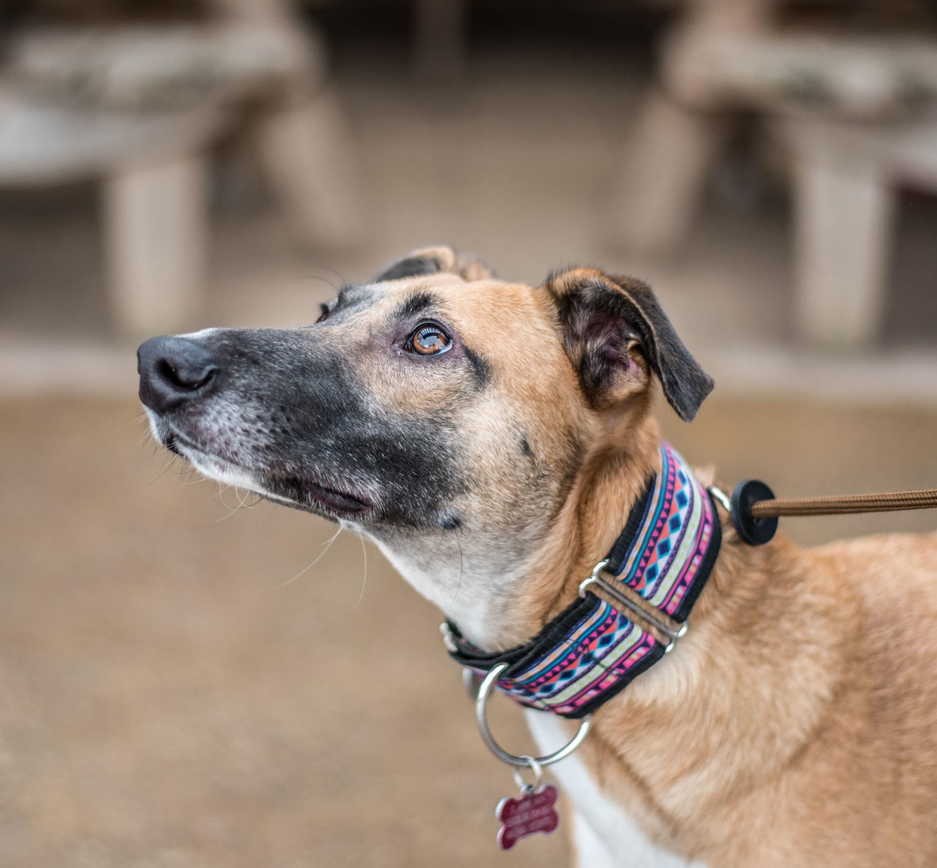 Evesham Greyhound & Lurcher Rescue