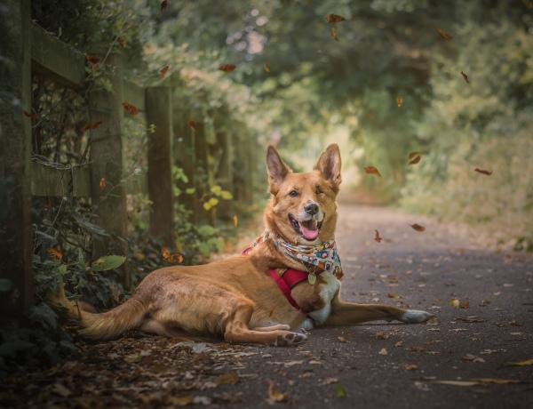 Tripaw Dog