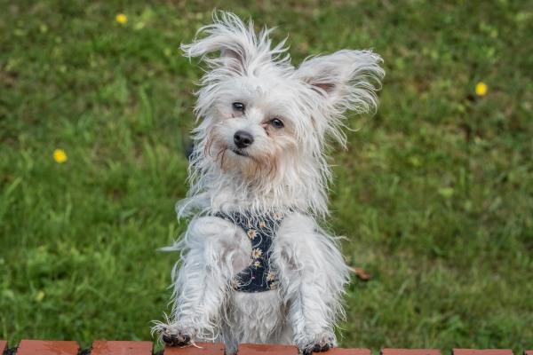 Tiny puppy Oswin
