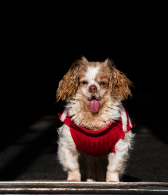 Romanian Rescue Dog
