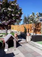 Dogfather garden spring