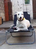 Dog on sun lounger