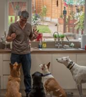 Dog Home Boarding Worcester