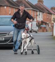Dog in wheels