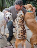 Rescue dogs having TLC