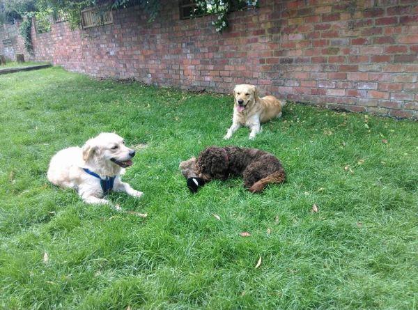 Three dogs in garden