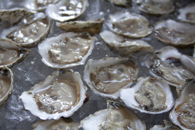 Texas Oyster