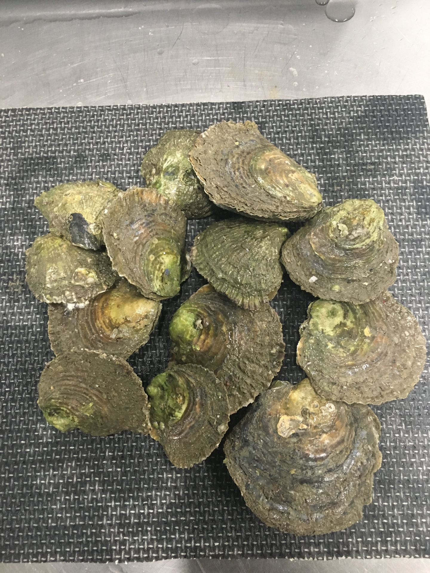Wild Caught Oysters