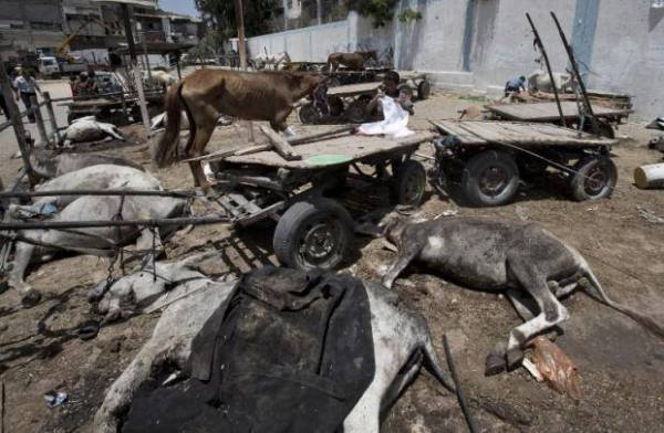 Killed Animals
