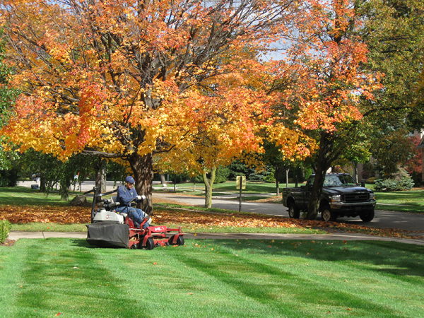 lawn care maumee