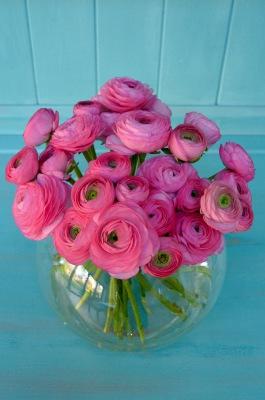 Rosado Pink Ranunculus