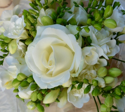Single rose surrounded by perfumed white freesia.