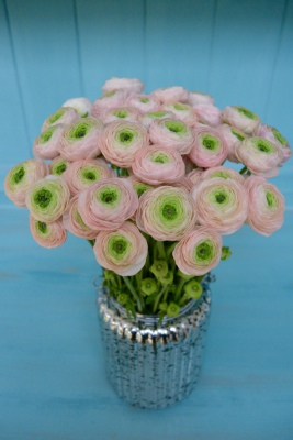 Pink and Green Ranunculus in a Silver Mercury Glass Jar.