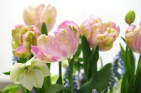 Spring flowers available at Justin Critchley Flowers