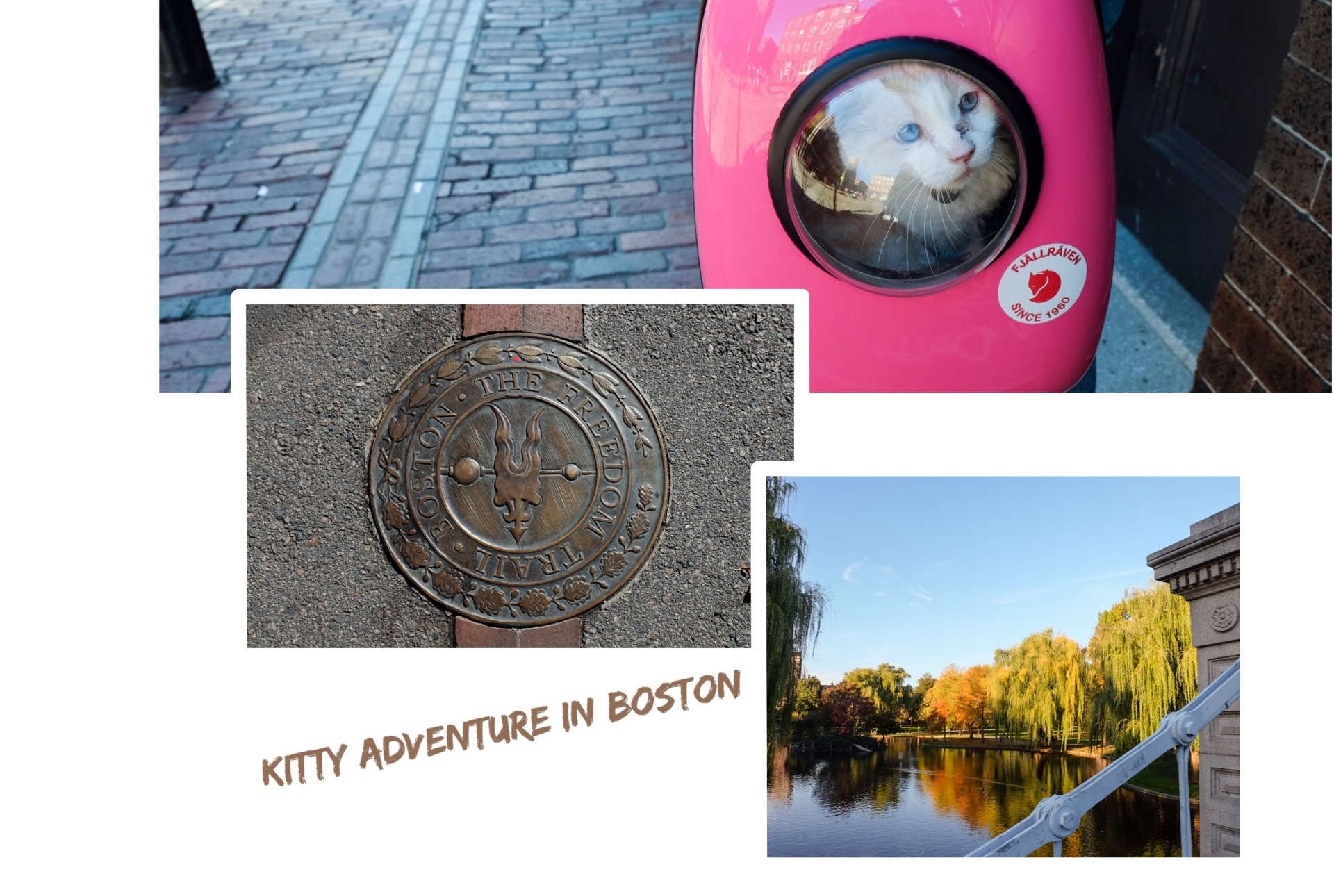 Kitty Adventure in Boston