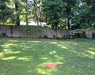 Uphill backyard to the site of the future 16x10x9.5 storage shed.