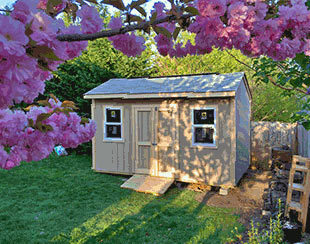 The new 14x10x9.6 shed with cherry blossoms in full bloom.