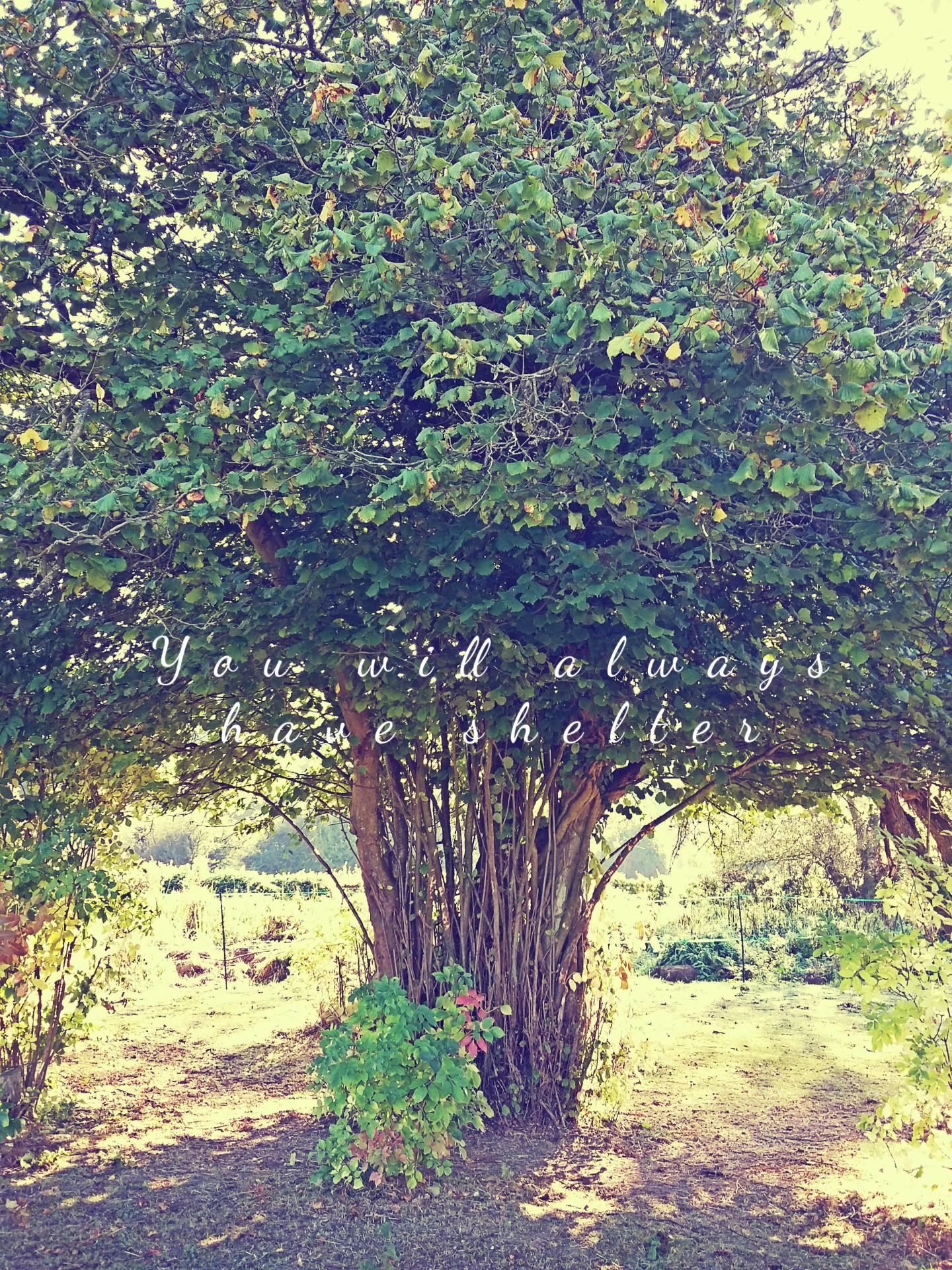 shelter-tree-