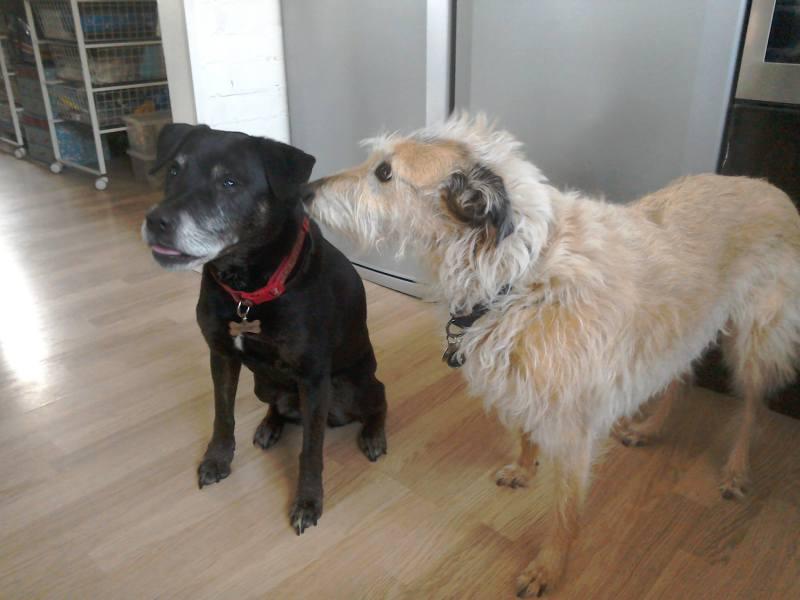 Milliie & Lulu
