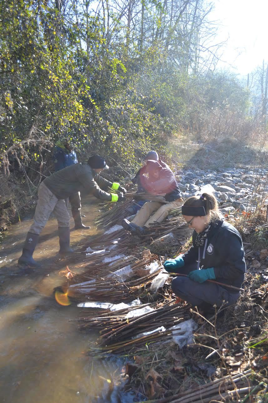Live Stake Workday with Sierra Nevada Volunteers