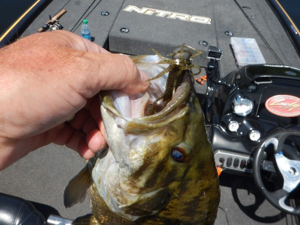Oneida Lake with the LC 2.5 and a Keitech Triple Threat as the Chaser
